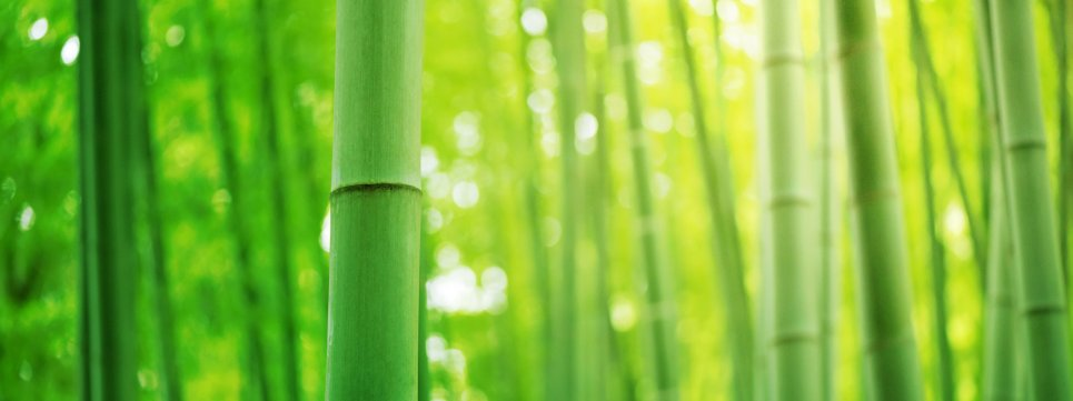 Bamboo as it grows